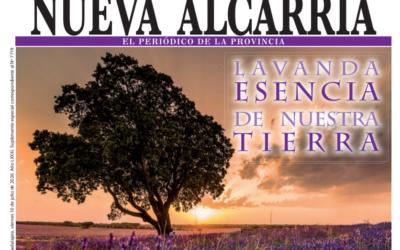 La lavanda, protagonista en Nueva Alcarria