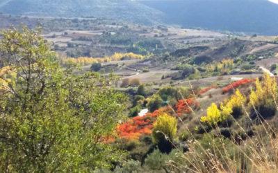 Cinco rutas de senderismo por Brihuega y la Alcarria